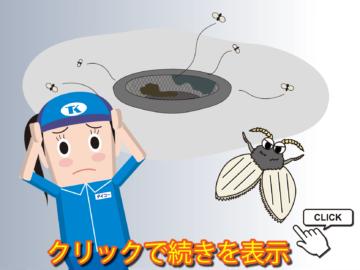 夏場必見!排水口から害虫がやって来る原因と対策をご紹介の画像