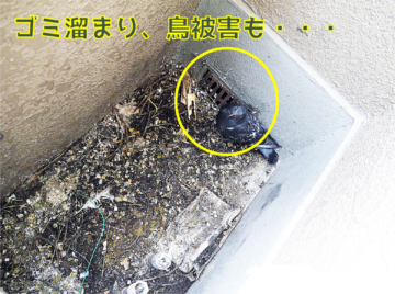 ベランダの排水溝にゴミがたくさんあり、鳥被害もある図