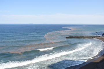 赤潮の写真